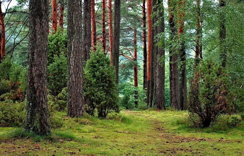Природа Польши